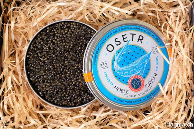 Natural black caviar of Siberian sturgeon