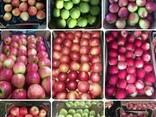 Apple wholesale Ukraine Яблока оптом Украина LLC Mitlife - фото 1