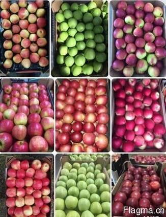 Apple wholesale Ukraine Яблока оптом Украина LLC Mitlife