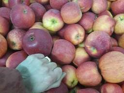 Apples fresh - photo 6