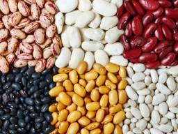 Bohnen, Leinsamen, Linsen, Kichererbsen, Erbsen und andere landwirtschaftliche Produkte.