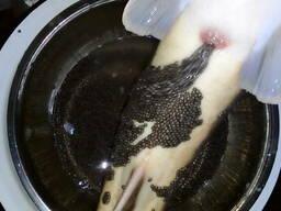 Natural black caviar of Siberian sturgeon - photo 5