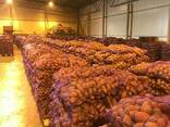 Fresh potatoes: Breeze , Manifesto - perfect quality - photo 1