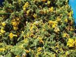 Лекарственные травы - фото 8