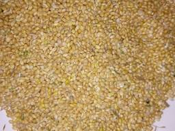 Millet yellow, red