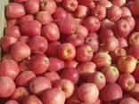 Продам яблоки - photo 1