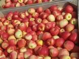 Продам яблоки - photo 3