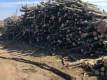 Уголь древесный - photo 2